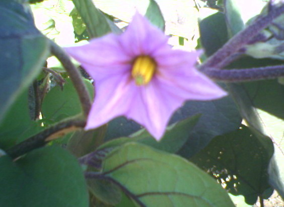 whats_flower.jpg